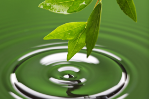 Image of a leaf producing a ripple on water